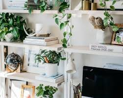 Best Plants For Bathroom No Light by Plant Bathroom Flowers Best Indoor Plants For Bathroom Small
