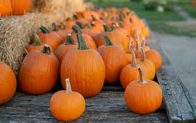 Valas Pumpkin Patch Jobs by Bomke U0027s Patch Growing Family Fun U2014 Eighteen21