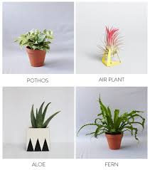 baby nursery Handsome Plants Bathroom Pot For Bathrooms