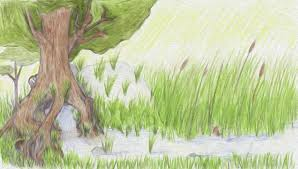Tree Spring Author Drawing