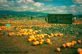 Mission Valley Pumpkin Patch by Pumpkin Picking At The Aloun Farms Pumpkin Patch Exploration Hawaii