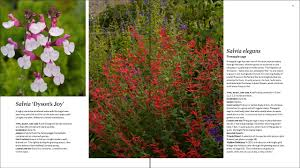 Good Plants For Bathrooms Nz by The Plant Lover U0027s Guide To Salvias The Plant Lover U0027s Guides