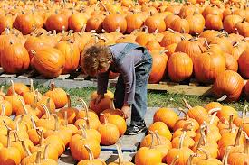 Pumpkin Picking Nj by Halloween Attractions In Nj