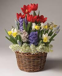 flower baskets bulb gardens order one month three