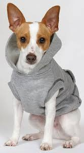 Top 10 Dogs That Dont Shed by Rat Terriers What U0027s Good About U0027em What U0027s Bad About U0027em