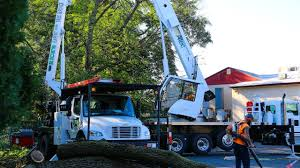 Altec Crane Tree Removal With Bucket Truck Bucks County PA - YouTube