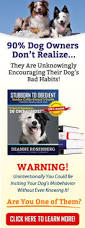 List Of Dogs That Shed Hair by List Of Dog Breeds That Don U0027t Shed Hair Excessively