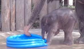 Baby Elephant In Pool Youtube