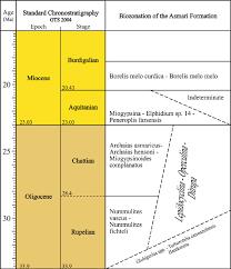 99 Bu Chem Biozonation Of The Asmari Formation After Van Chem Et Al