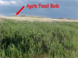 Agate Fossil Beds by How Fossils Form