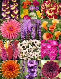 summer cut flower garden with 193 bulbs includes gladiolus