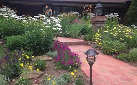 Perennial Wildflower Garden Design - Colorado Native Landscaping ... Free Images Blossom Lawn Flower Bloom Backyard Botany Go Native Or Wild News Creating A Wildflower Meadow From Part 1 Youtube Wildflower Garden Update Life In Pearls And Sports Bras Budapest Domestic Integrity Field Of Wildflowers She Shed Decorating Ideas How To Decorate Your Backyard Pics Best 25 Meadow Garden Ideas On Pinterest Rockoakdeer Neighborhood For National Week About Texas A Whole Wildflowers For Tears The Duster Today Fields Flowers Design With Apartment Balcony