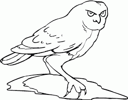 Free Printable Owl Coloring Pages For Kids And Color Book