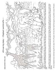 Animal Coloring Page Elephant And Giraffe Print Size