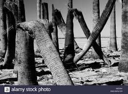 Bent Tree Black And White Stock Photos & Images - Alamy Expert Claims Mysterious Bent Trees Were Secret Native Americans Crooked Forest Wikipedia Stp77089 Greenery And Tree Trunks In Forest Karjat Mahashtra Indian Bent Trees History Or Legend Show Me Oz Larry The Lorry More Big Trucks For Children Geckos Garage New Trucks Bodies Equipment Trailers Seen At Wasteexpo How To Fix A Leaning Tree I Love The Wooden Beds Rarin To Go Ford Mysterious Are Actually American Trail Markers Wind Stock Images 542 Photos Bend Diamonds Ieee Spectrum Black White Alamy