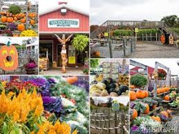 Pumpkin Picking Nj Near Staten Island by Best Things To Do In Jersey City Jcfamilies