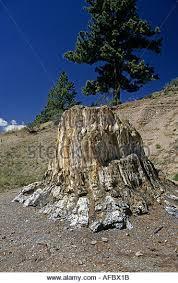 florissant fossil beds national monument stock photos florissant