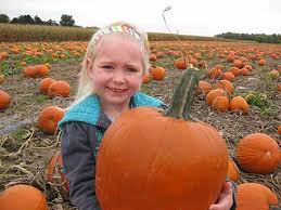 Pumpkin Patch Toledo Ohio by Corn Maze