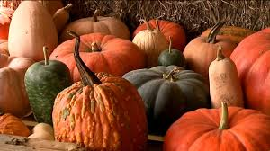 Pas Pumpkin Patch 2017 by Pumpkin Picking At A Tree Farm In Carbon County Wnep Com