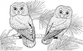 Difficult Animal Coloring Pages For Adults 1