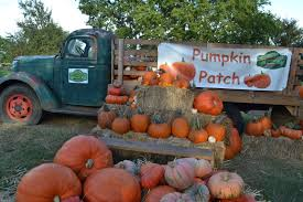 Pumpkin Patch Spring Tx by Pumpkin Patch At Blessington Farms Kids Out And About Houston