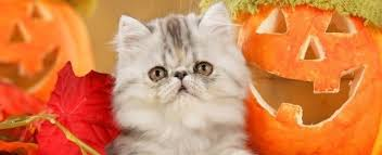 orange cat names best themed cat names petplace