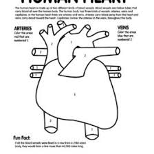 Anatomy Coloring Pages Heart Google Twit