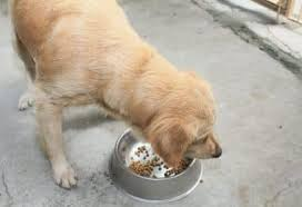 Pumpkin Puree For Dog Constipation by Constipation In Dogs Help Your Dog Empty Its Bowels
