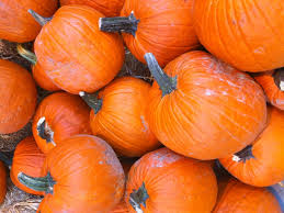 Best Pumpkin Picking Bergen County Nj by Pick Your Own Pumpkins Teaneck Nj Patch