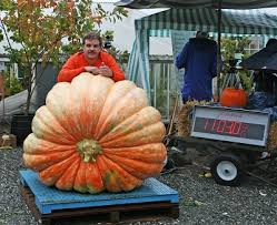 Barnesville Pumpkin Festival Parade 2017 by 2016 Giant Pumpkin Weigh Offs By State And Area