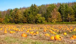 Connecticut Field Pumpkin For Pies by Pumpkin Spice Is A Big Fat Lie Eat Sip Trip