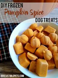 Using Pumpkin For Dog Constipation by Diy Frozen Pumpkin Spice Dog Treats Irresistible Pets