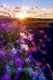Field of flowers sun Nature Pinterest