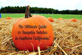 Pumpkin Patch Pasadena Area by 30 Awesome Pumpkin Patches In Southern California Socal Field Trips