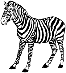 Coloring Page Zebra Tags Coins Fawn Pages