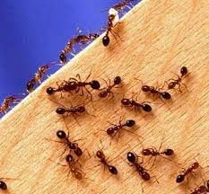 Carpenter Ants In Your House Winter Tiny Kitchen Counter Baby