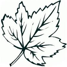 Medium Size Of Coloring Pagesleaf Picture Leaf Maple Leaves Pages Clipart