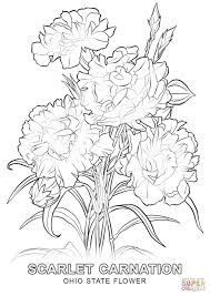 Awesome Printable Carnation Flowers Coloring Books For Kids