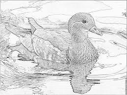 Coloring Mandarin Duck 2