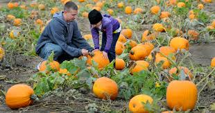 Indianapolis Apple Orchard Pumpkin Patch by Fall Fun At Pumpkin Patches Around Indianapolis
