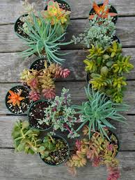 Succulent Plants Ready For Garden PLANT CHOICES FOR THIS LIVING WALL GARDEN