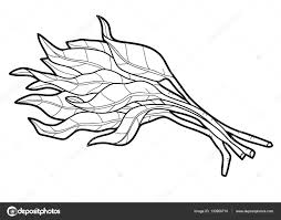 Coloring Book For Children Plant Water Spinach Vector By Ksenya Savva