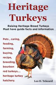 Heritage Turkeys. Raising Heritage Breed Turkeys Must Have Guide ... Raising Turkeys Morning Routine Youtube 117 Best Helpful Tips And Tricks For Livestock Pets Images On What Do Wild Turkeys Eat Feeding Birds Your Homestead Homesteads Turkey 171 Ducks Geese Guineas Farm Tales A Holiday Feast In Our Own Backyard Free 132 Pinterest Backyard Chickens 1528 Chickens Coops Chicken How To Raise Hgtv Bring Up Other Fowl