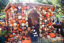 Pumpkin Patch Spring Tx by Dallas Arboretum Unveils Massive Village Made From 50 000 Pumpkins