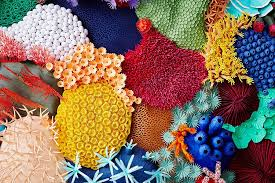 Paper Art Coral Reef By Mlle Hipolyte