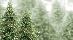 Neuman Christmas Tree Retailers by The Best Artificial Christmas Trees In The Country Are At Aldik