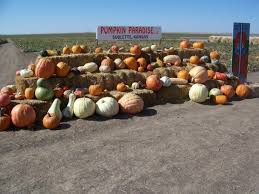 Pittsburgh Area Pumpkin Patches by 11 Best Pumpkin Patches In Kansas
