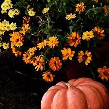 Pumpkin Patch Near Corona Ca by Visit Amy U0027s Farm Ontario Ca 91762 Tours Education Workshops
