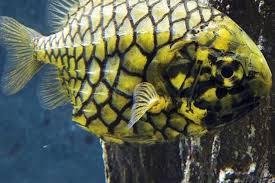 grand aquarium de malo aquarium de malo toutes les infos pratiques