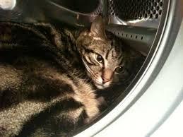 my cat has dandruff cat with dandruff forum switzerland